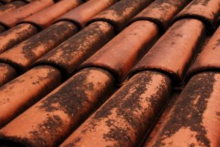 How Professional Roof Cleaning Helps With Columbus Algae Problems
